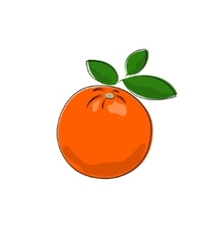 Citrus orange isolated on white vector