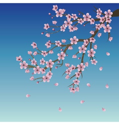 Branch of sakura over sky vector