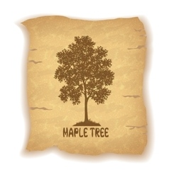 Maple Tree on Old Paper vector image vector image