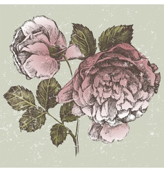 old style roses vector image