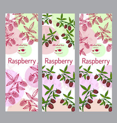 Herbal tea collection raspberry banner set vector