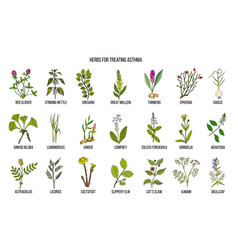 Natural herbs collection for asthma treating vector