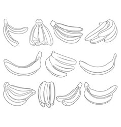 set of different bananas vector image vector image