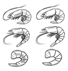 set of shrimps icons isolated on white background vector image