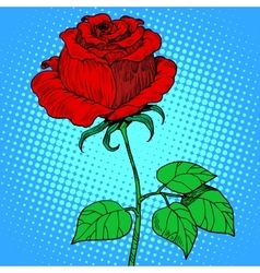 Rose red flower vector