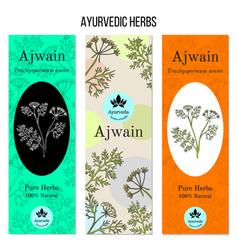 Ayurvedic herbs banners ajwain vector