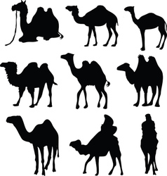 Camel silhouettes vector image vector image