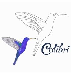 Educational game coloring book colibri bird vector