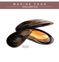 Mussels marine food vector