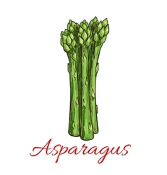 Asparagus vegetable plant icon vector image