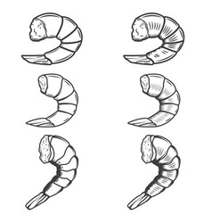 Set of shrimp tails isolated on white background vector