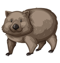 Wild wombat on white background vector