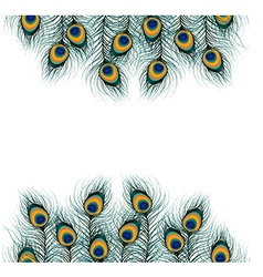 Peacock feather on isolated background vector