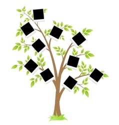 Famity tree vector image