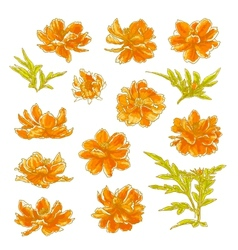 Collection of cosmos flowers vector