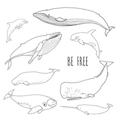 set of different whales vector image vector image