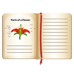 Parts of flower on a book vector image vector image