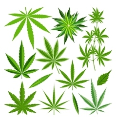 Marijuana leaf set vector