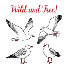 Set with seagulls on isolated white background vector