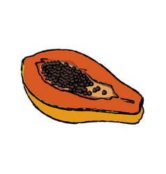 Papaya fruit fresh harvest nutrition food vector