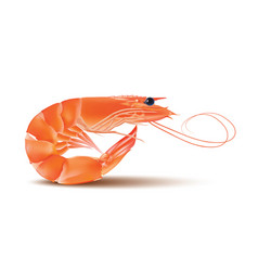 Shrimp seafood prawn with head and legs vector