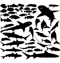 Fish set vector