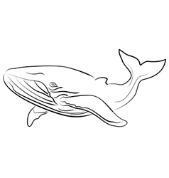 Hand drawn sketchy whale vector