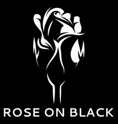 with white rose on black vector image vector image