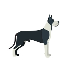 Great dane dog breed - on white background vector