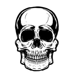 hand drawn human skull on white background vector image vector image
