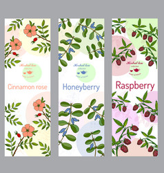 herbal tea collection cinnamon rose raspberry vector image vector image