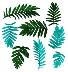 tropical leaf set vector image