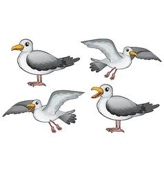 Four birds vector image