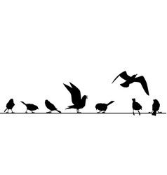 feathered ones sit on wires silhouettes of vector image
