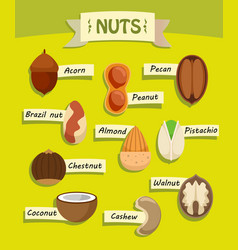 Flat natural nuts elements collection vector
