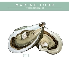 Oyster marine food vector