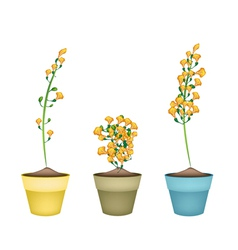 Yellow padauk flower in ceramic flower pots vector