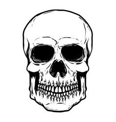 Hand drawn human skull isolated on white vector