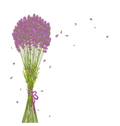 Purple lavender flower background vector