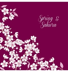 Background with sakura vector image vector image
