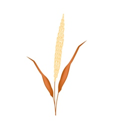 Golden colors of ripe millet on white background vector