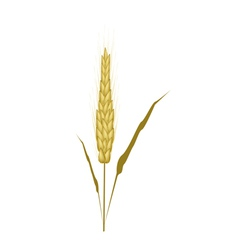 Golden color of wheat on white background vector