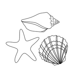 Seashells from the bottom of the seasummer rest vector