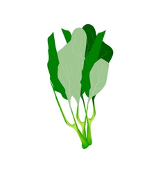 Fresh green chinese kales on white background vector