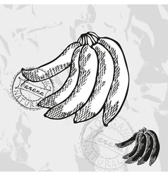 Hand drawn decorative banana vector