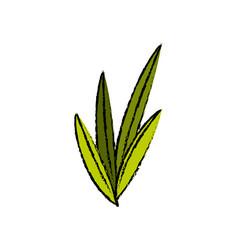 Leaves plant nature foliage botanical image vector