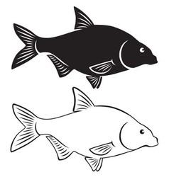 bream fish vector image vector image