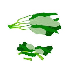Fresh Green Chinese Broccoli on White Background vector image vector image