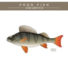Perch food fish vector
