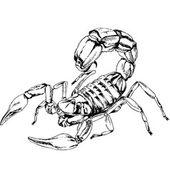 scorpio is drawn with ink tattoo vector image vector image